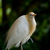 Birds : 1 gallery with 21 photos